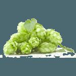 Хмель Chinook (Чинук) 10%, 50 гр