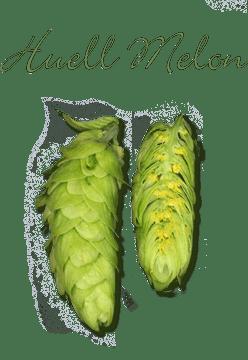 Хмель Huell Melon (Хьюэлл Мелон) урожай 2016 (6,2%), 50 гр