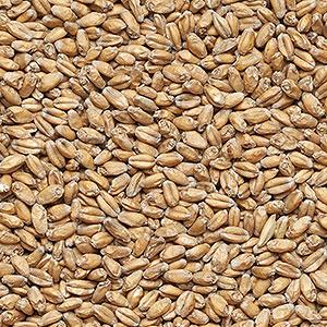 Солод КУРСКИЙ Пшеничный